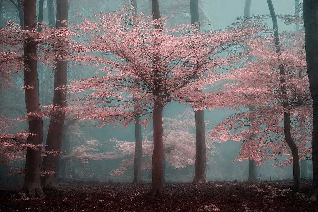 Mysterious Nature Photography by Lars van de Goor - Business Recorder