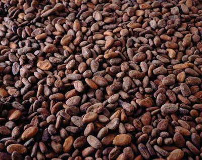 cocoa beans 400