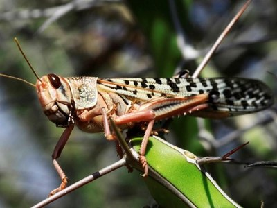 'Locust swarm may create food insecurity'