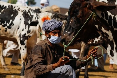 Govt allows cattle markets to operate from 6am till 7pm