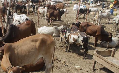 Animal markets witness sudden surge of customers