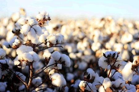 Nagina Cotton Mills Limited