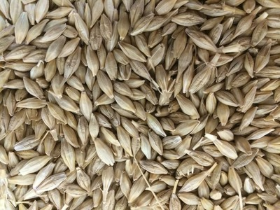 Algeria tenders for 25,000 T barley and 30,000 T corn