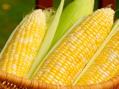 South Korea's KOCOPIA buys about 60,000 tonnes corn