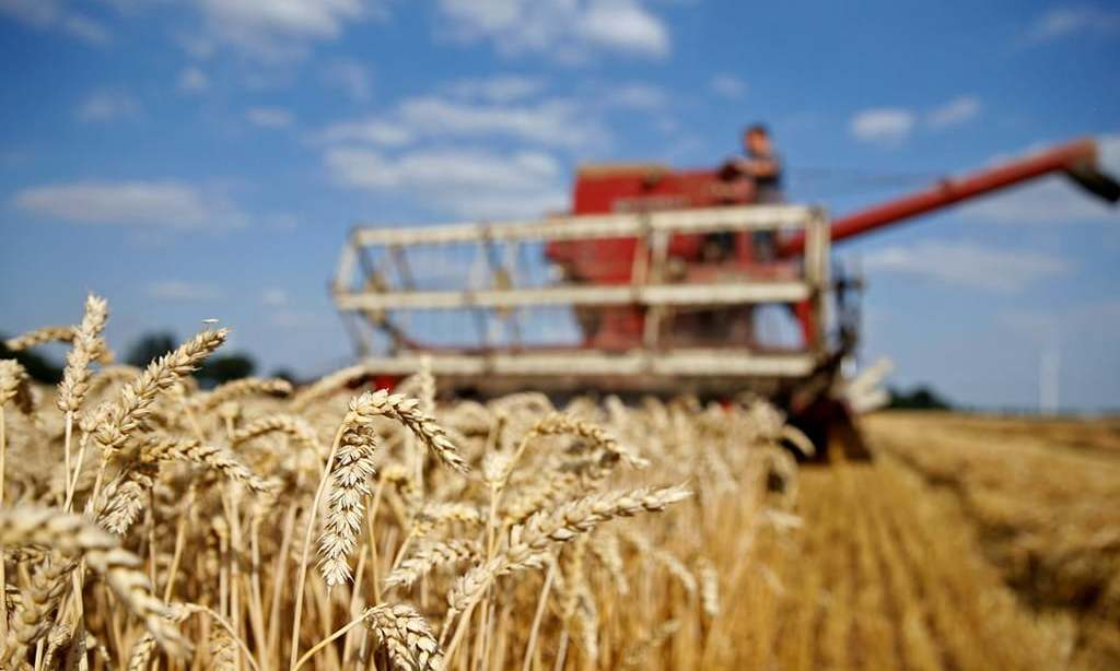 TCP awards another wheat contract