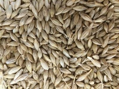 Japan to import 220 tonnes feed barley via tender