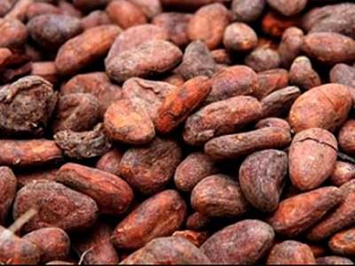 NY cocoa may drop into $2,686-$2,712 range