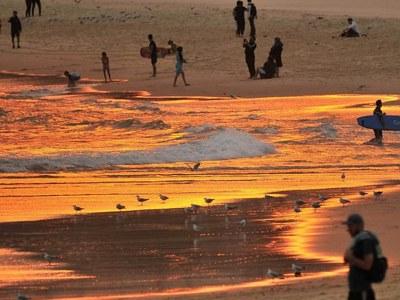 Sydney records hottest November night