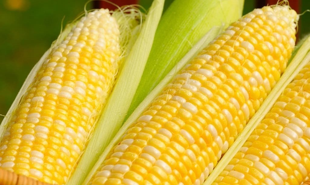 Algeria said to buy about 35,000 tonnes corn in tender