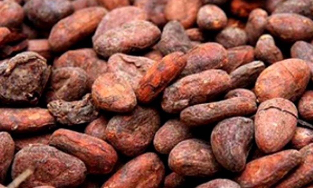 Ivory Coast cocoa arrivals reached 729,662 T by Nov. 30