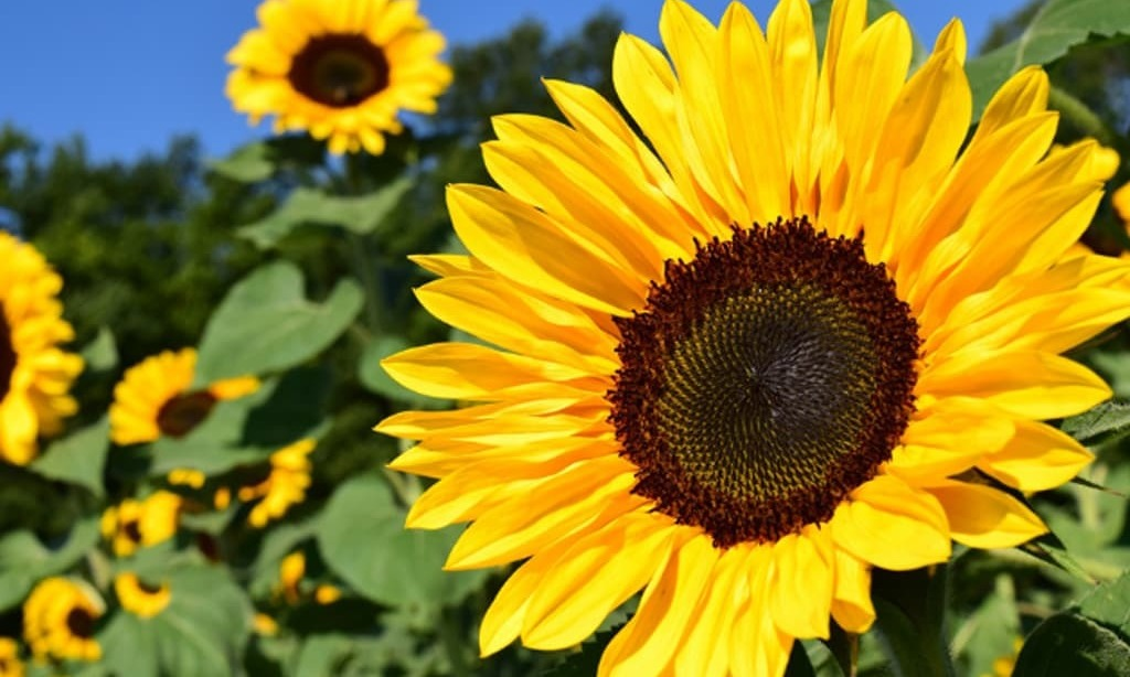 Iran's GTC tenders for about 30,000 tonnes sunflower oil