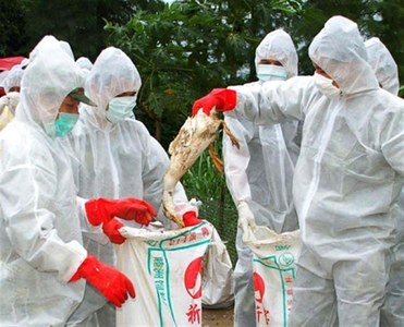 Japan's bird flu outbreak worsens, government orders disinfection of poultry farms