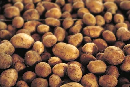 Pakistan to establish Potato Development Council to enhance exports