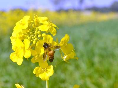 Pakistan to launch Billion Tree Tsunami Honey Project