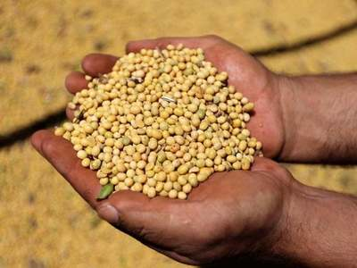 CBOT soybeans end higher on Argentina rainfall, labor strikes
