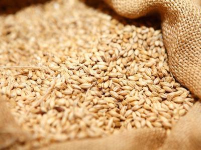 CBOT wheat slips as U.S. crop prospects improve