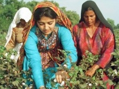 Experts for protection of women agriculture workers