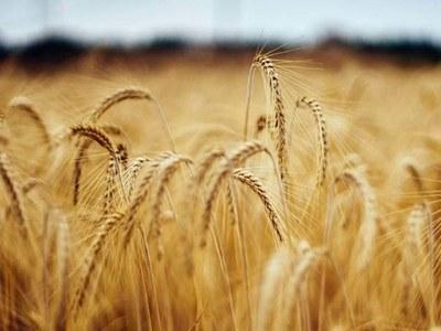 European wheat hits 7-1/2-year high