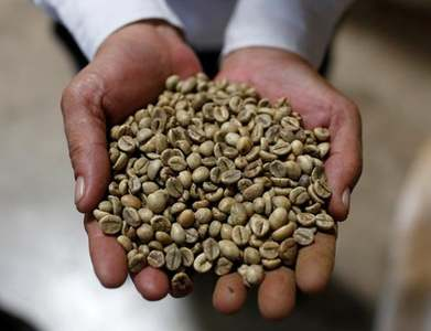 Coffee sales in Brazil at 78pc of 2020 crop, says consultancy