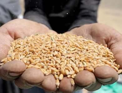 Turkey postpones tender to buy 400,000 tonnes wheat