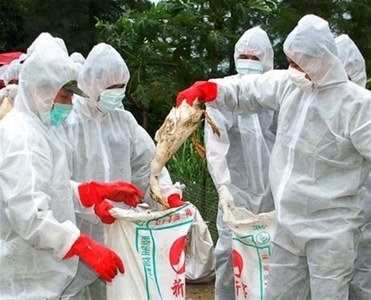French bird flu outbreak coming under control: government