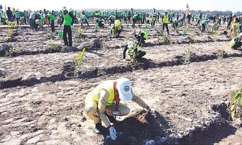 British parliament praises Pakistan's 10 billion trees project