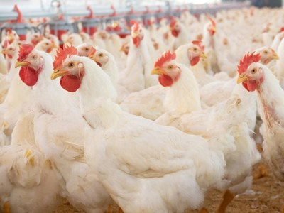 Broiler prices: new frontier?