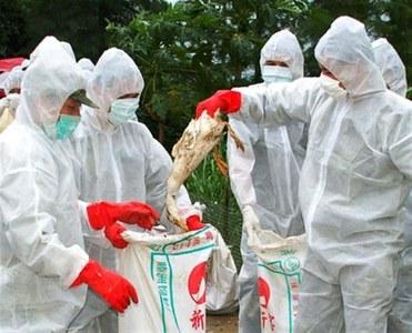 Germany culls 14,000 turkeys after bird flu was found on another farm