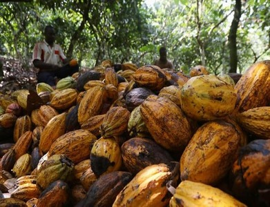 Ivory Coast 2020/21 cocoa port arrivals seen at 1.388mn tonnes by Feb 7