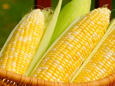 Corn firms, set for 1% weekly loss on USDA estimate