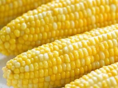 Corn steadies in Asian trade