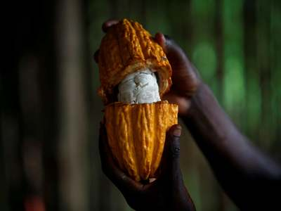 Cocoa gains, with New York hitting two-month high
