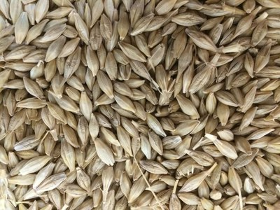 Algeria tenders to buy about 40,000 tonnes feed barley