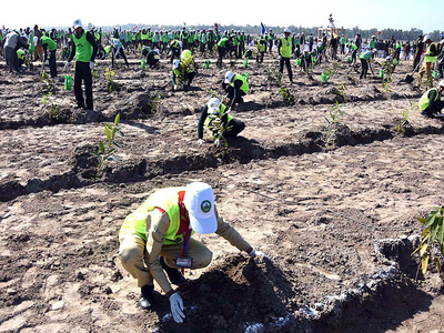 Minister reviews Ten Billion Tsunami Tree Programme