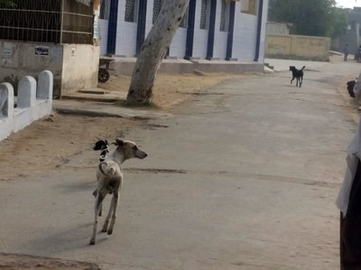 Sanctuary for stray dogs set up in Islamabad