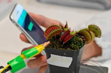 Researchers develop 'roboplants' to detect abnormalities in crops