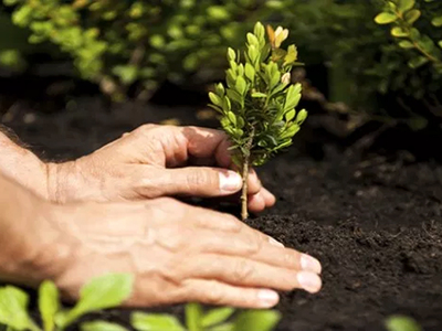 Tree plantation drive: Over 14,000 saplings planted on green belts, says Laeeq