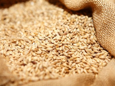 Wheat firms as dry weather threatens North American plantings