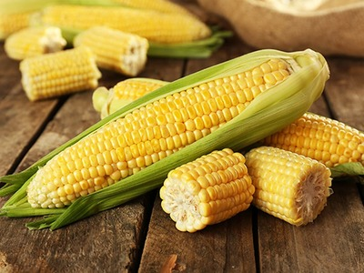 Corn gains on exports, ethanol optimism