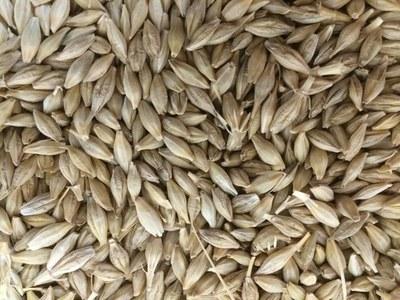 Ukraine barley export prices fall