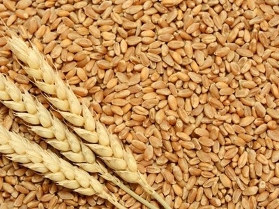 EU wheat hits new highs in volatile session