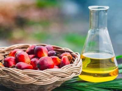 Palm oil futures down
