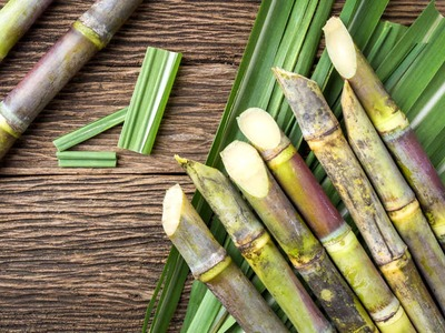 Brazil's sugar cane crush revised down