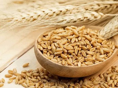 Tunisia buys about 50,000 tonnes of feed barley