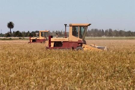 Ukraine spring grain sowing 58pc complete