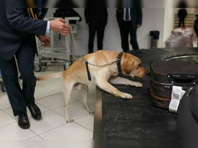 COVID-sniffing dogs deployed at New Islamabad Airport