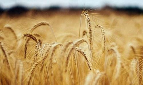 Punjab produces 20mn metric tons of wheat: Fawad