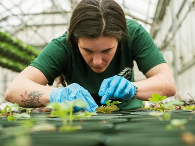 Horticulture- An unexplored avenue of growth
