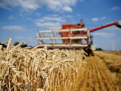Country witnesses record production of wheat: minister