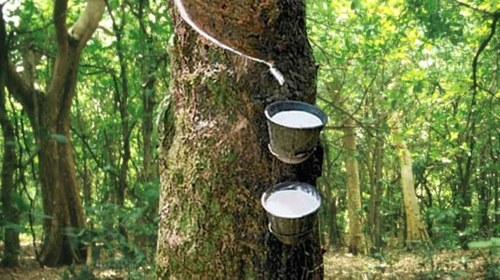 Tokyo rubber futures lower